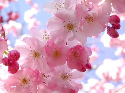 Pretty-pink-flowers-arosyoutlook-a-rosy-outlook